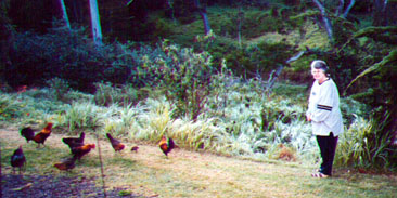 Wild chickens outside our cabin at Koke'e Lodge